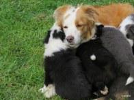 cuddles mum