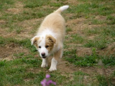 cheeky puppy