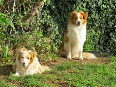 Tui & Riley