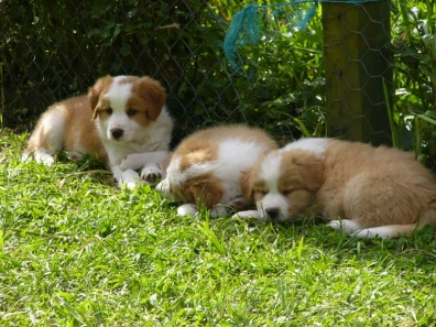 Lani with her siblings