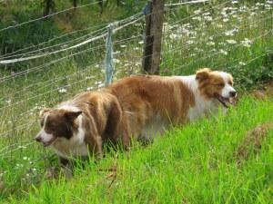 Molly & Riley
