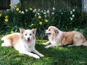 Ginger & Bear