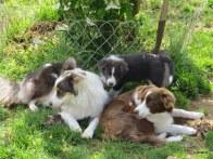 Sue Frankie & pup