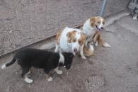 Talking with Rosie & Bella
