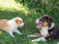 Bella and Chico