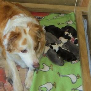 tui and pups