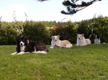 jessie, tyler, jasper and brucie