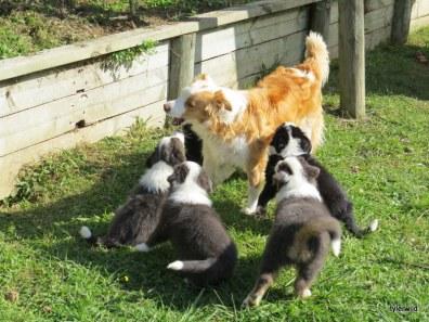 tui enjoying her pups