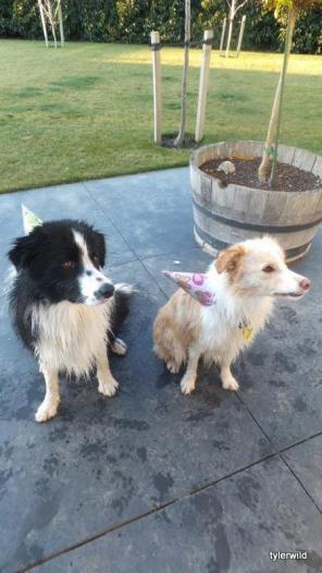 Charlie and Stella