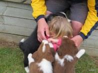 go away puppies...