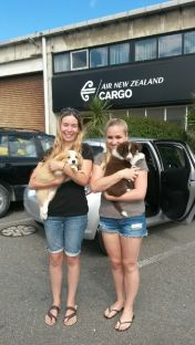 Kayla with Flynn, Saicha with Bella in Wgtn