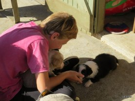 Finn and pups
