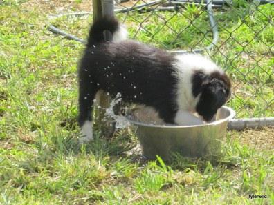 water baby Bonnie