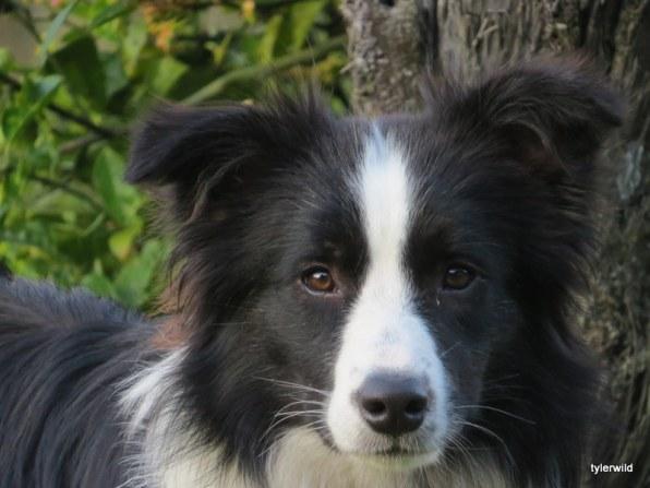 Bobbie 1 1/2 years old