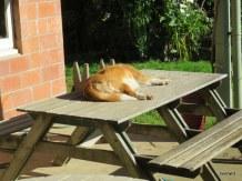 shiraz enjoying the sun