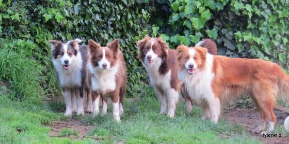 sue, molly, frankie and riley
