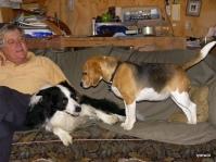 hi to the beagle holly