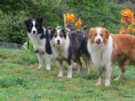 Bobbie, Sue, Riley
