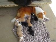 Lani and babes