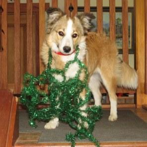 Merry Xmas from Tylerwild