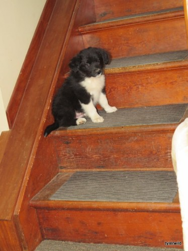 Leo testing our stairs