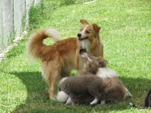 Zac georgie and pups