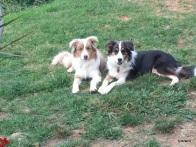 Georgie and Gypsy