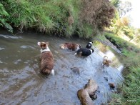 exploring the water ways