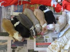 7 newborns