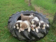 wheel of cuteness