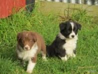 Jasper and DaVinci