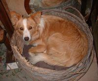 feb 2004 1 yr old