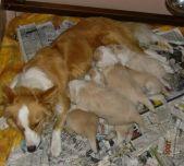 Maddie's clan at 3 weeks