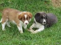Pixie and Rambo
