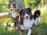 Mishka, Chico and Ezrah