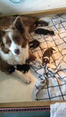 Molly and pups