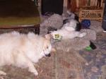 buddies, even insleep