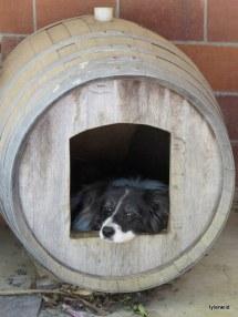 Her barrell